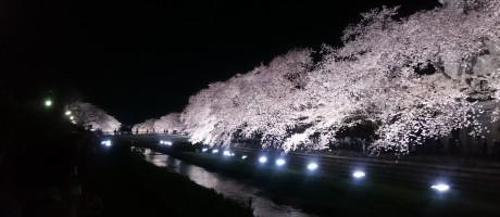 野川夜桜ライトアップ2018